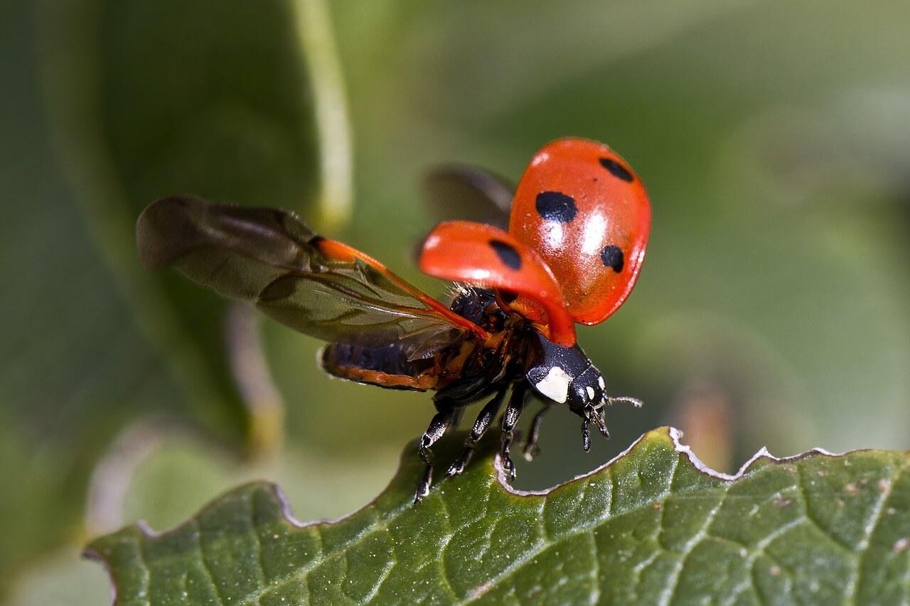 虫の知らせ体験談【虫の知らせに気づいたら、すぐに会いに行くべき】